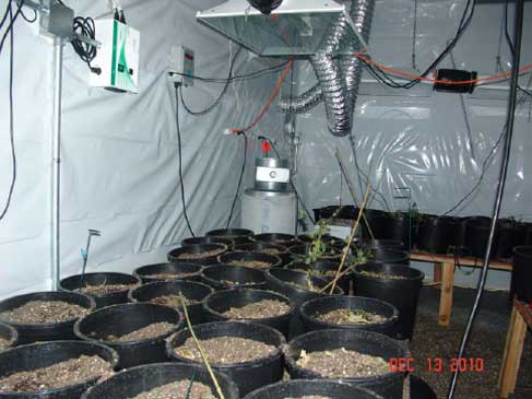 Commercial Burglary Turns Up Marijuana Grow Escondido